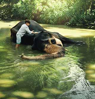 Boy in river washing elephant
