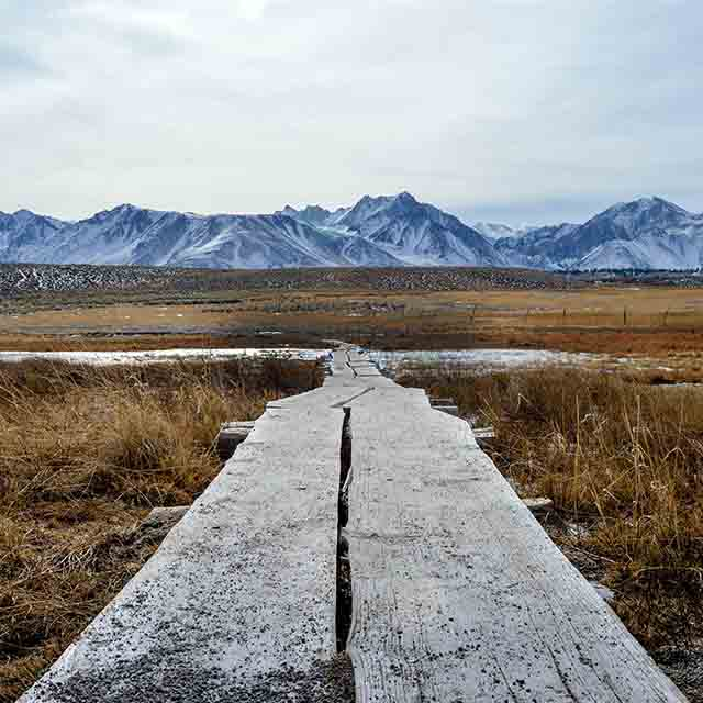 wooden boardwalk in grasslands